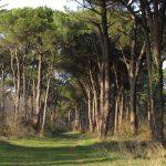 Ravenna - Pineta di San Vitale